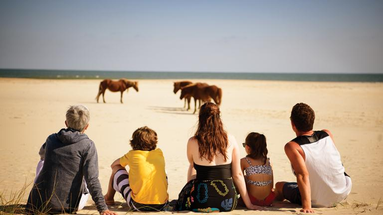 Family Watches Ponies at the Beach