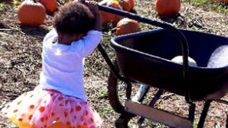 LIttle girl pushing a wagon with pumpkins