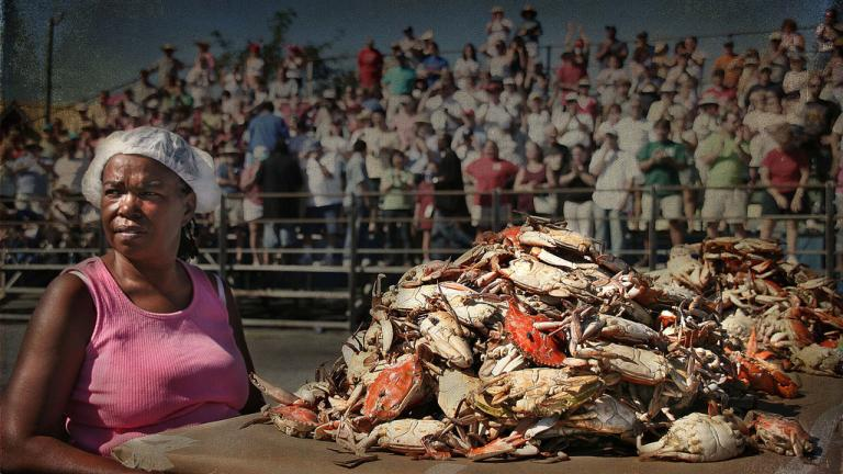 National Hard Crab Derby in Crisfield - Crab Picking Competition