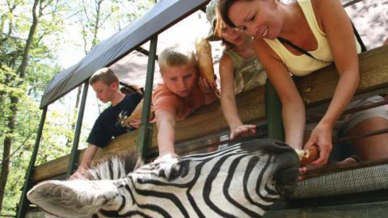 See Zeebras at the Catoctin Zoo Safari