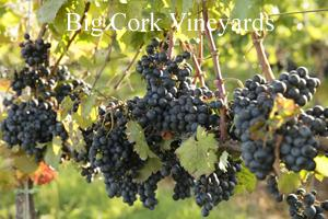 Big Cork Vineyards