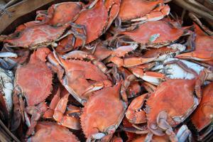 Crabs in Crisfield