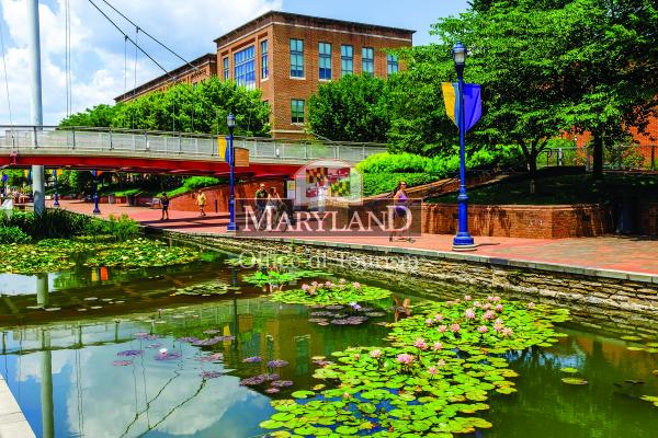 Carroll Creek Park is a great place for a stroll anytime of the day