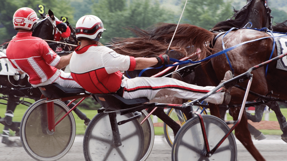 Live Harness Racing