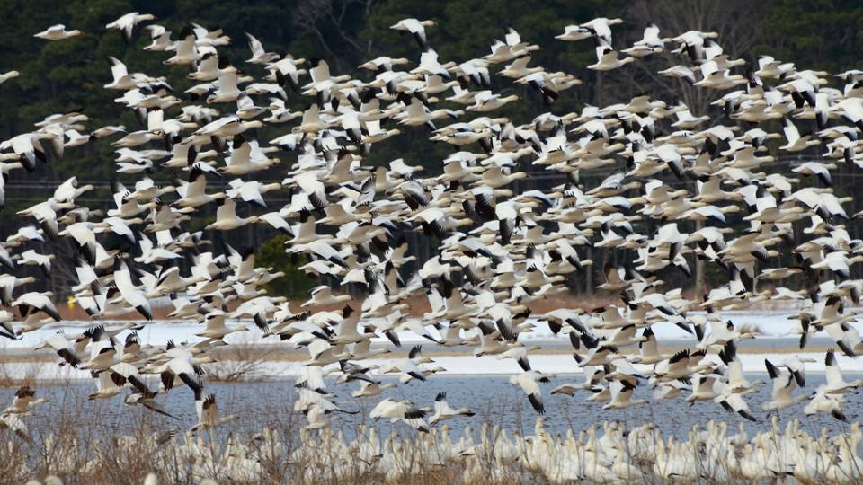 birds at Blackwater National Wildlife Refuge