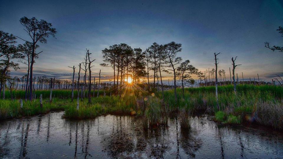 Blackwater National Wildlife Refuge at Sunrise
