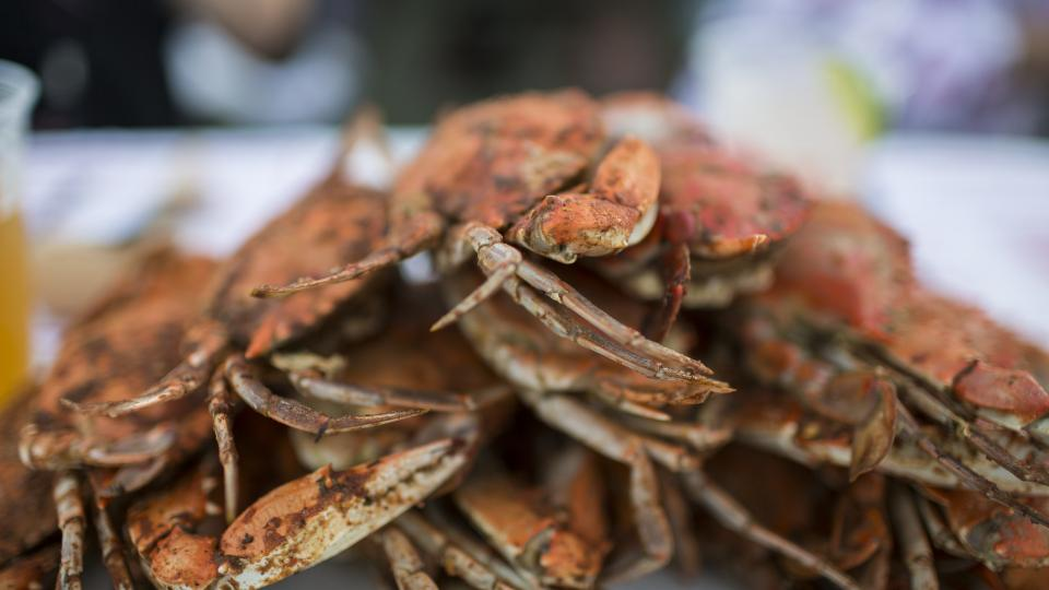 Fresh Crabs at Crab Claw
