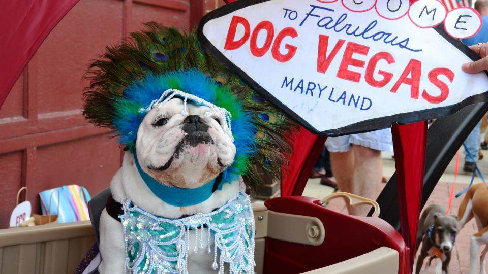 Pet Friendly Outdoor Attractions And Events Visit Maryland