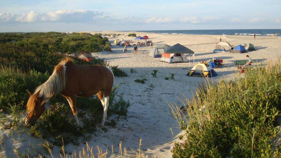 Horses on Beach Maryland Beaches Beaches