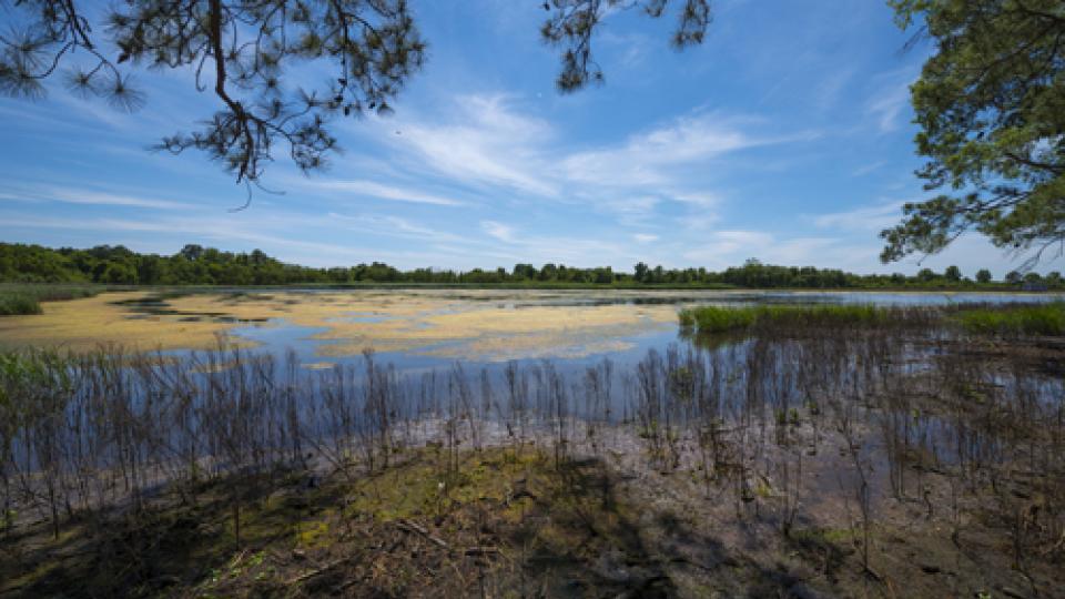 Chesapeake Bay Environmental Center marsh