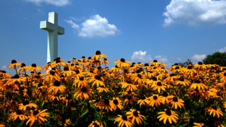 St. Clements Cross with a field of Black-Eyed Susans