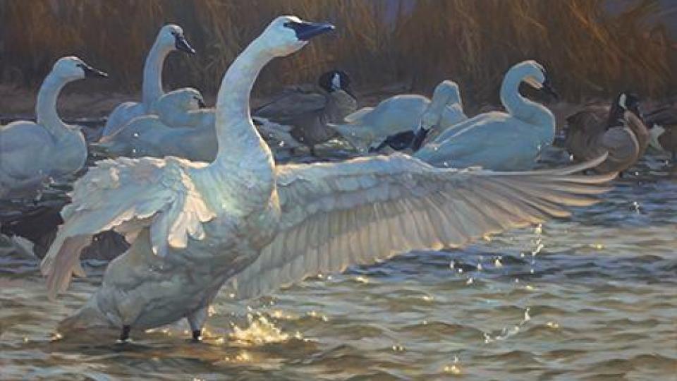 Waterfowl painting