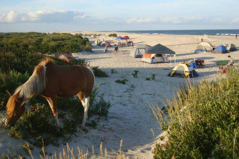 Camping on the beaches of Assateague and enjoying the wild ponies