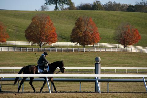 Horse  and rider at Sagamore Farm