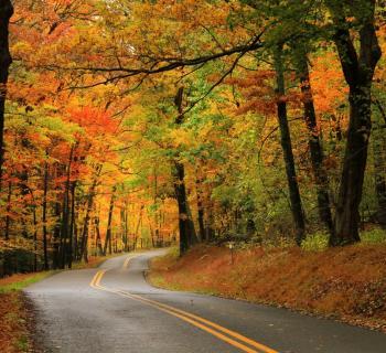 Fall Foliage in Garrett County, Maryland Photo