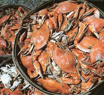Baskets of steamed crabs Photo