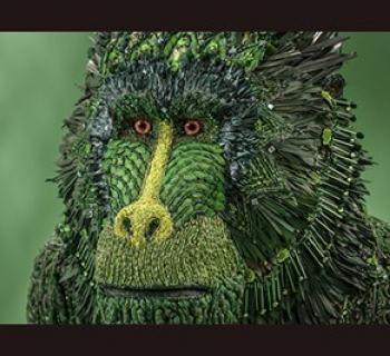 """""""Green Monkeys-Mandrill"""" by Johanna Burke Photo"""