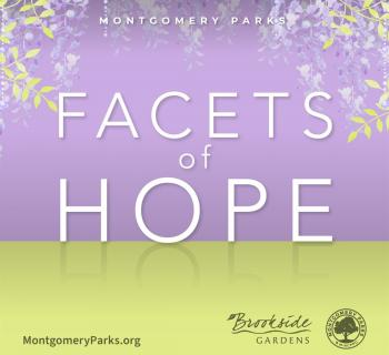 Facets of Hope Exhibit Graphic Photo