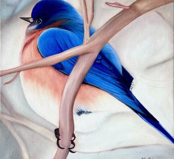 Bluebird Oil Painting Photo