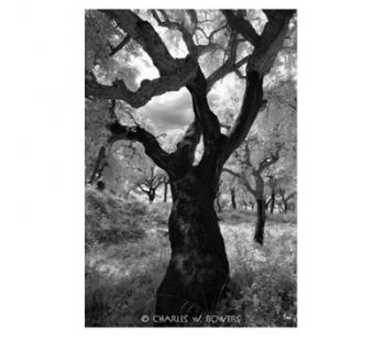 Black and White Photo of a Tree Photo