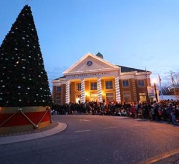 Christmas Tree at Town Hall Photo