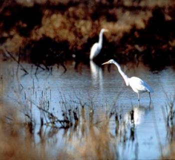 Blackwater National Wildlife Refuge  Photo