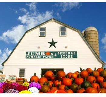 The General Store @ Jumbos Pumpkin Patch Photo