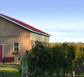 Picture of a building and grape vines at Triple Creek Winery Photo