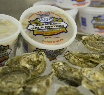 Packaged Oysters Photo