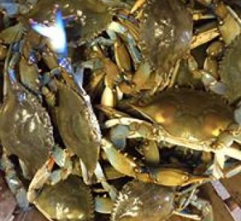 Bushel of crabs Photo