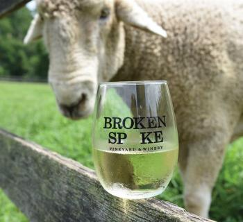 Picture of a sheep with a glass of white wine from Broken Spoke Vineyard and Winery Photo