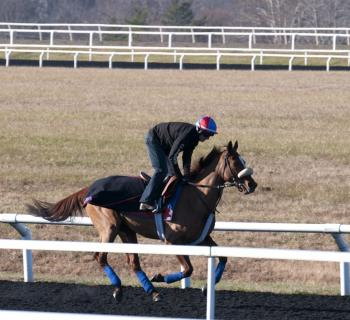 Fair Hill Training Center Photo