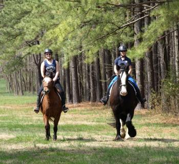 Tailsman Therapeutic Riding  Photo