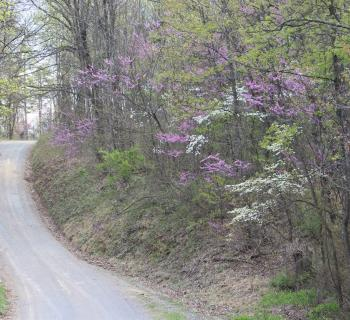 Road in Green Ridge State Park Photo