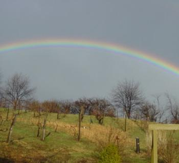 Rainbow over Deep Creek Cellars Photo