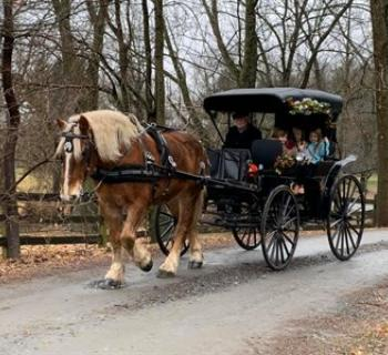Fairwinds Farm and Stables-Carriage Ride Photo