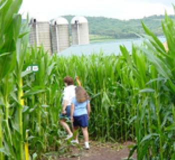 Corn maze Photo Photo
