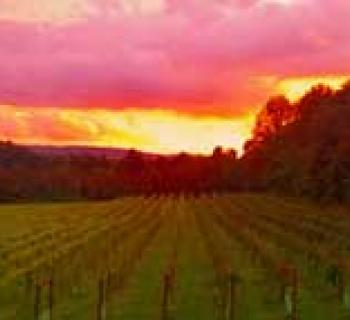 Sunset view at Red Heifer Winery Photo