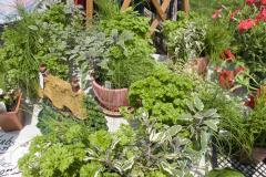 Montpelier Festival of Herbs, Tea and the Arts