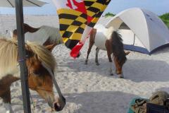 Assateague Island National Seashore Beach Camping