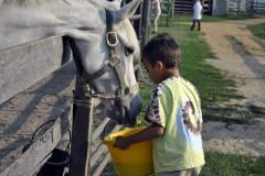 A young boy feeds a horse at A Moment in Time Farm