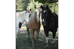 Three horses at Elk Mountain Trails