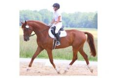 Holly Ridge Farm Equestrian Center rider and horse