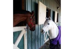 Two horses appear to confer at Jewel's Landing Farm