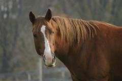 A Beautiful Horse at Waredaca Farm