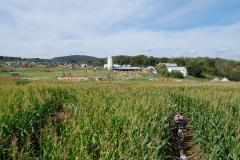 Corn Maze - Thurmont