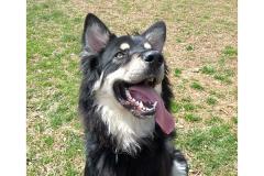 Arlo the Dog