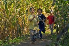 boys in corn maze