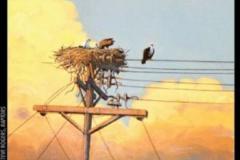 Painting of raptors by Steve Rogers