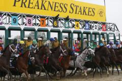 Horses coming out of the gate at Pimlico